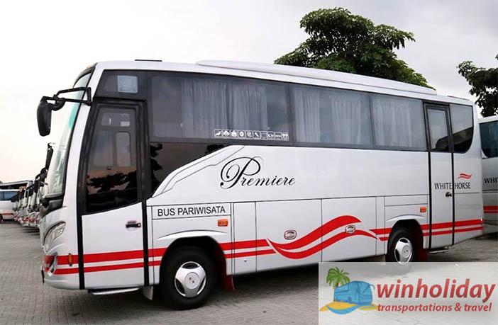 tampilan medium bus 31 seats